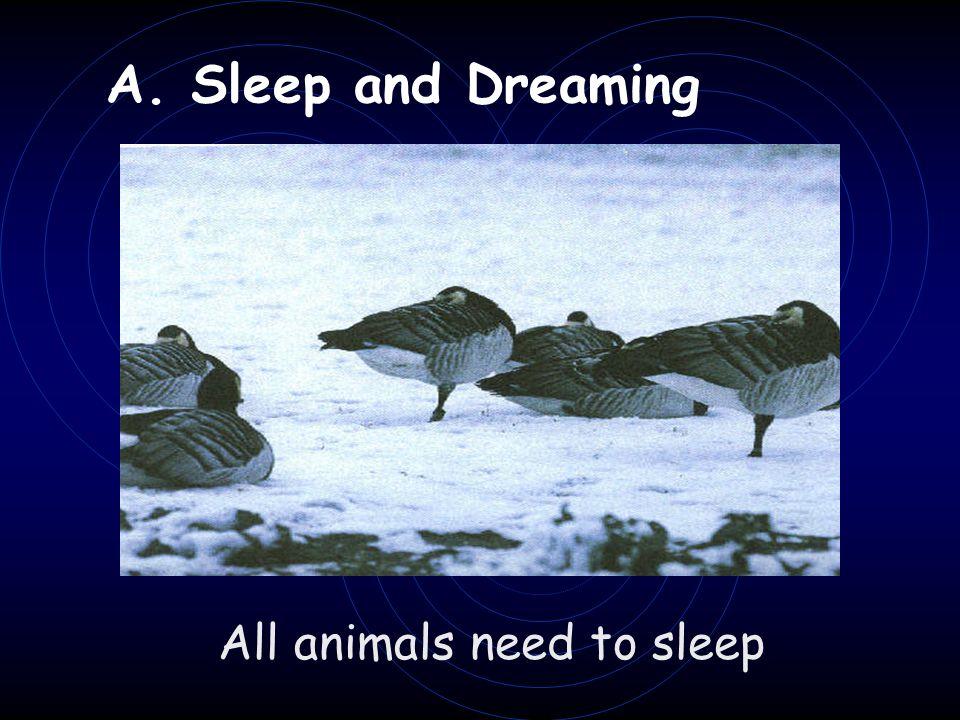 A. Sleep and Dreaming All animals need to sleep