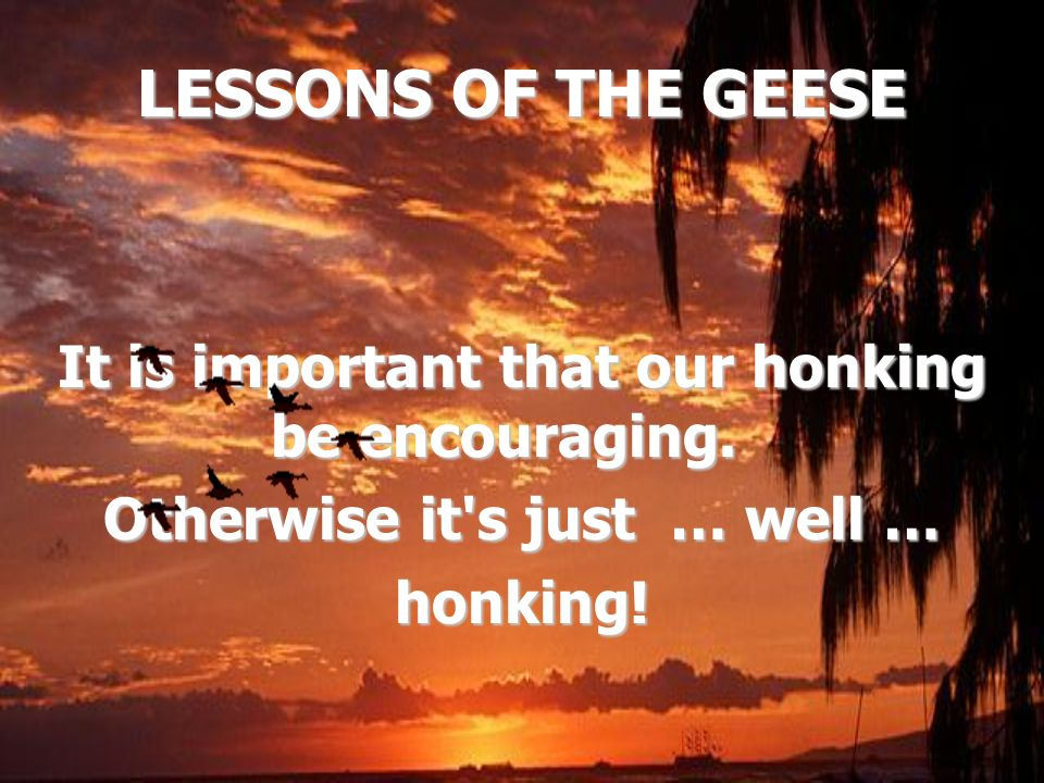 LESSONS OF THE GEESE It is important that our honking be encouraging. It is important that our honking be encouraging. Otherwise it's just … well … ho