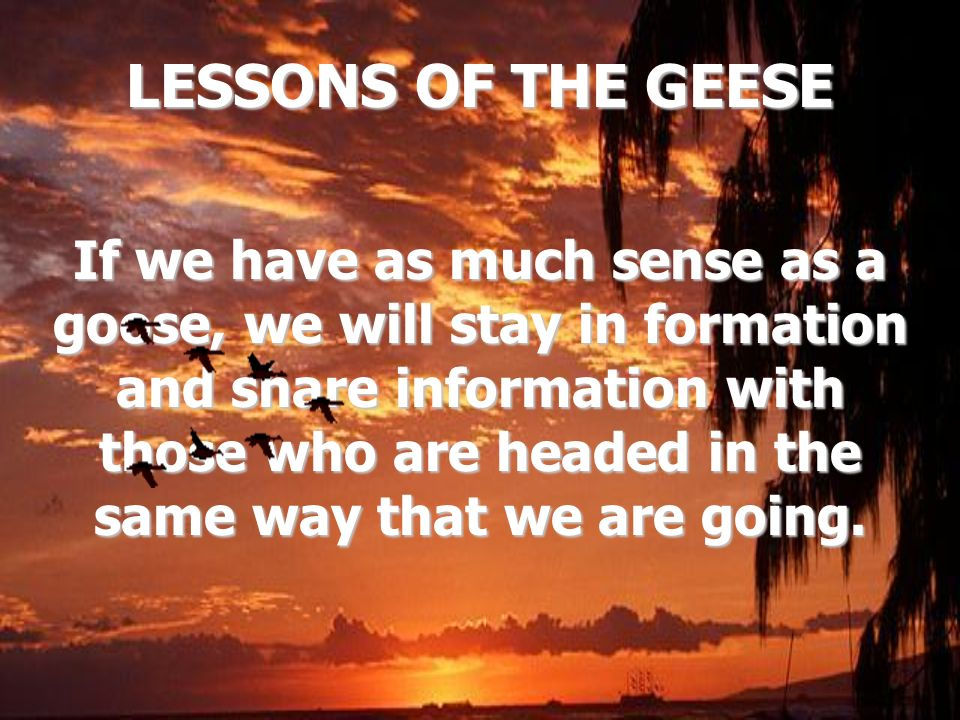 LESSONS OF THE GEESE If we have as much sense as a goose, we will stay in formation and share information with those who are headed in the same way th