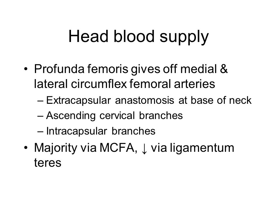 Head blood supply Profunda femoris gives off medial & lateral circumflex femoral arteries –Extracapsular anastomosis at base of neck –Ascending cervic