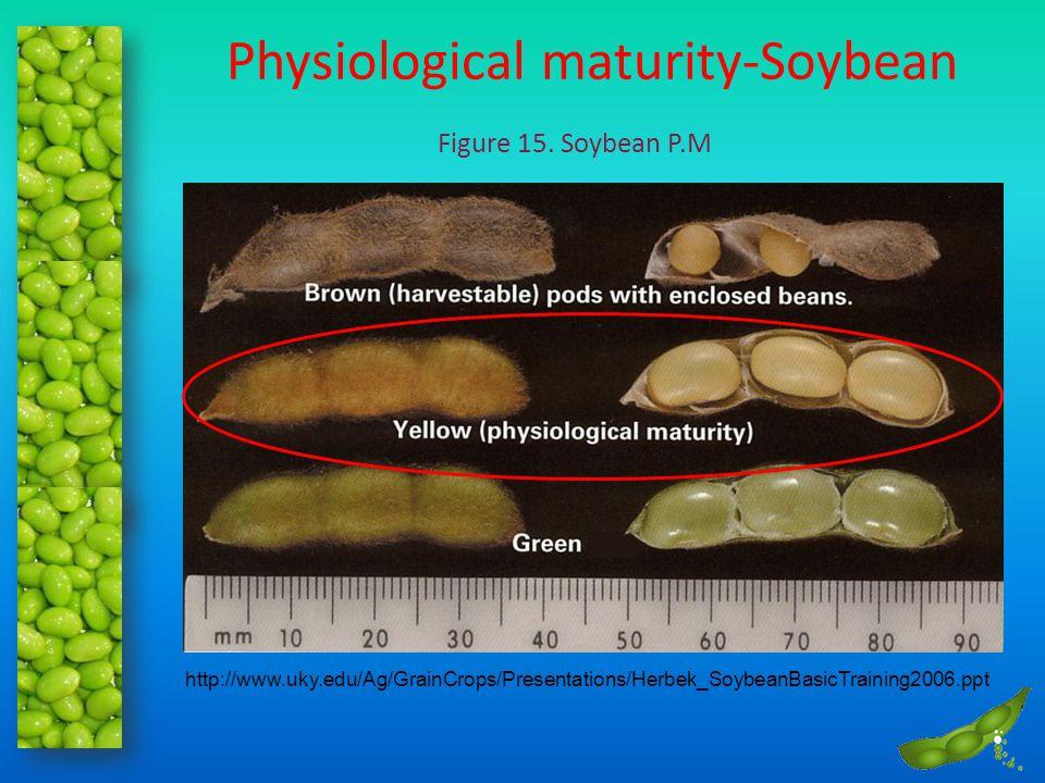 Physiological maturity-Soybean Figure 15. Soybean P.M http://www.uky.edu/Ag/GrainCrops/Presentations/Herbek_SoybeanBasicTraining2006.ppt