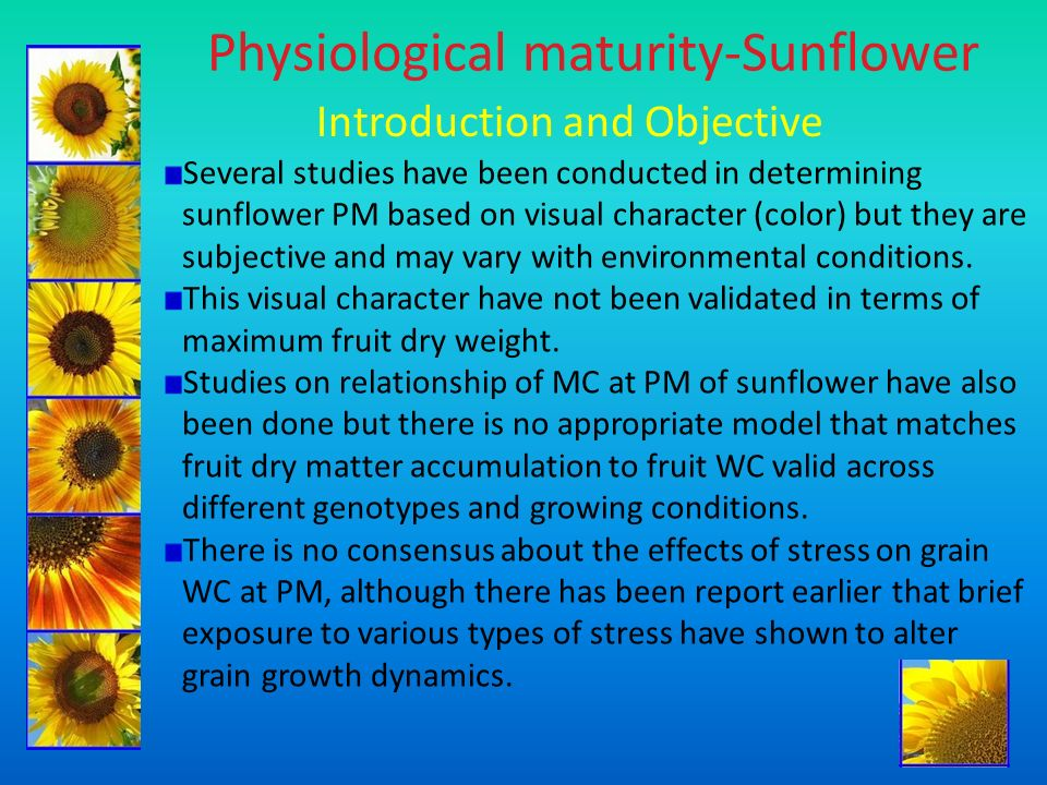 Physiological maturity-Sunflower Introduction and Objective Several studies have been conducted in determining sunflower PM based on visual character