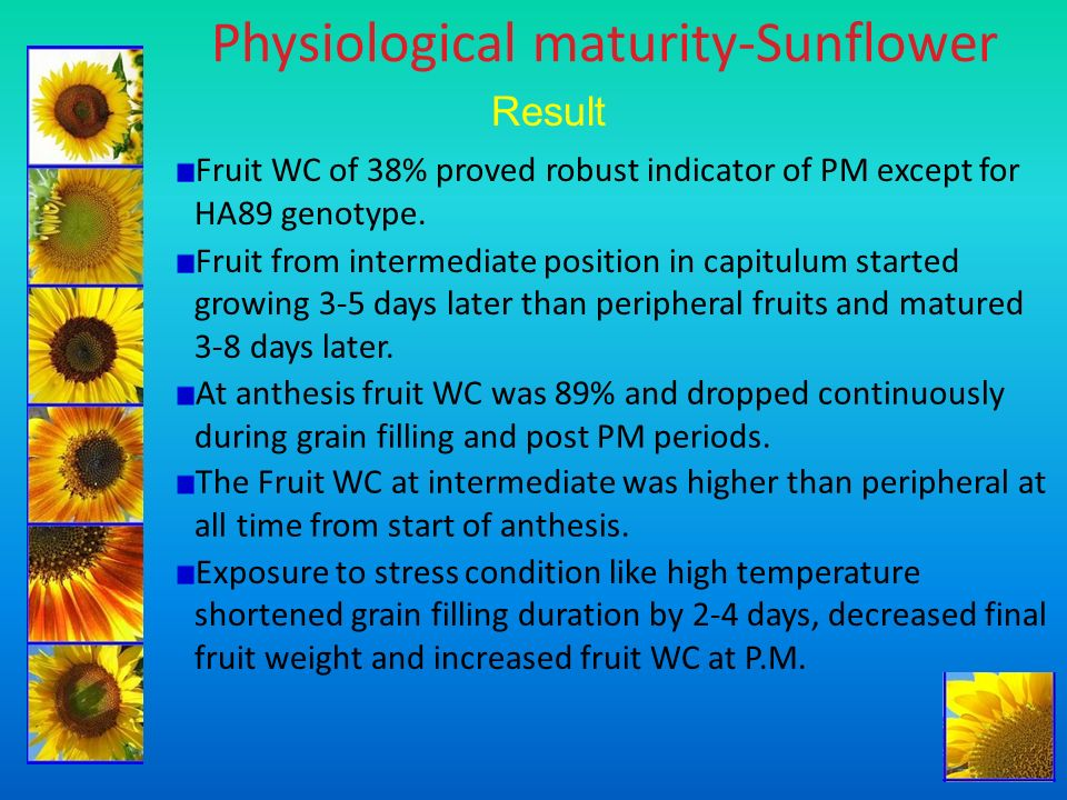Physiological maturity-Sunflower Result Fruit WC of 38% proved robust indicator of PM except for HA89 genotype. Fruit from intermediate position in ca
