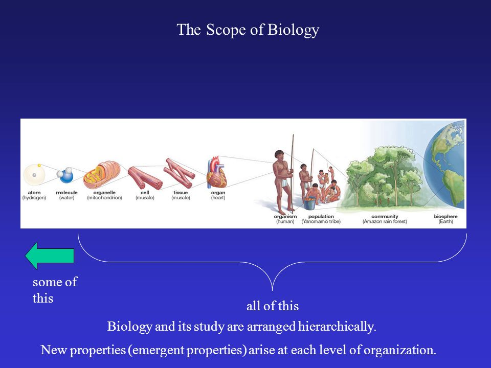 The Scope of Biology all of this some of this Biology and its study are arranged hierarchically. New properties (emergent properties) arise at each le