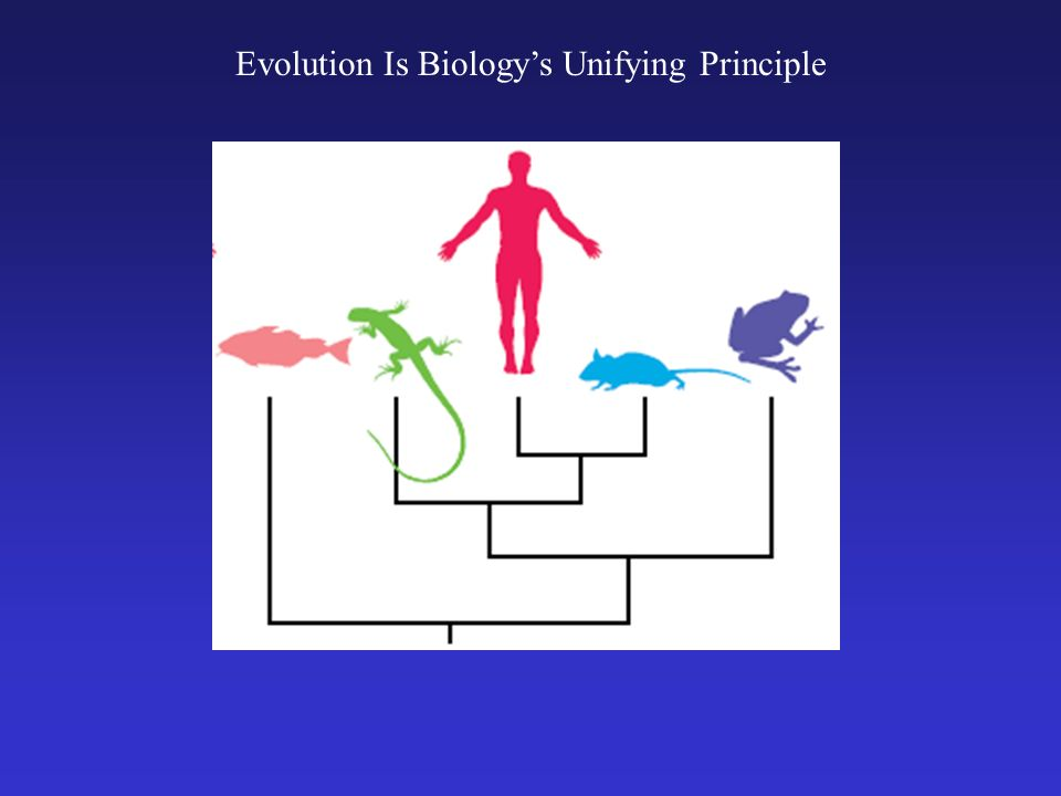 Evolution Is Biologys Unifying Principle