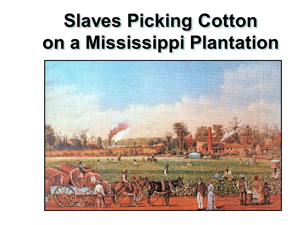 Slaves Using the Cotton Gin