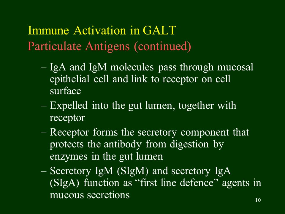 10 Immune Activation in GALT Particulate Antigens (continued) –IgA and IgM molecules pass through mucosal epithelial cell and link to receptor on cell