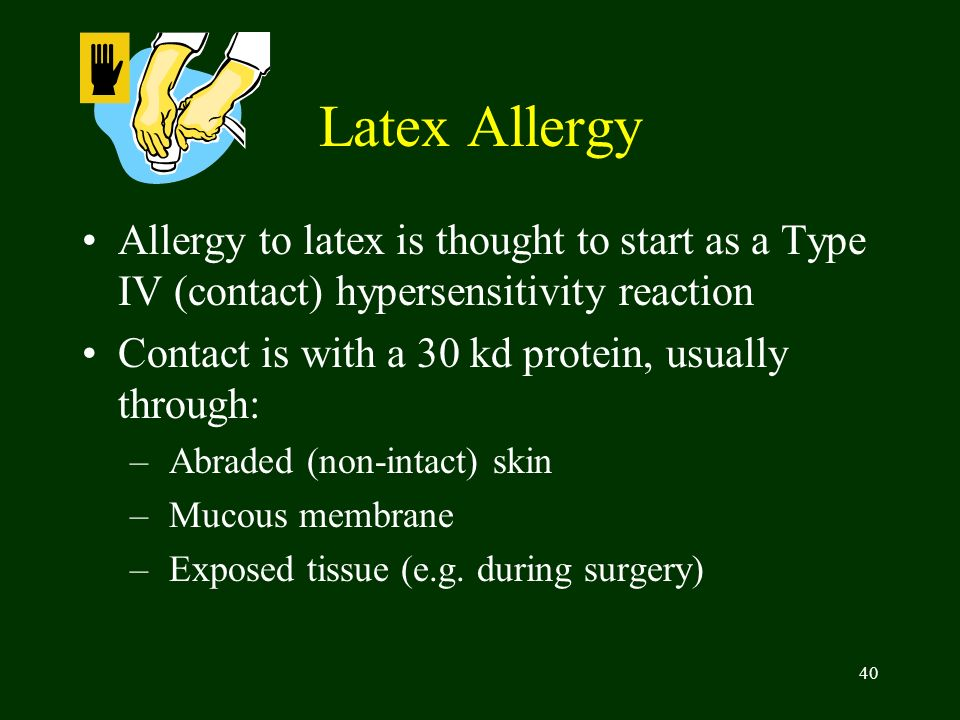 40 Latex Allergy Allergy to latex is thought to start as a Type IV (contact) hypersensitivity reaction Contact is with a 30 kd protein, usually throug
