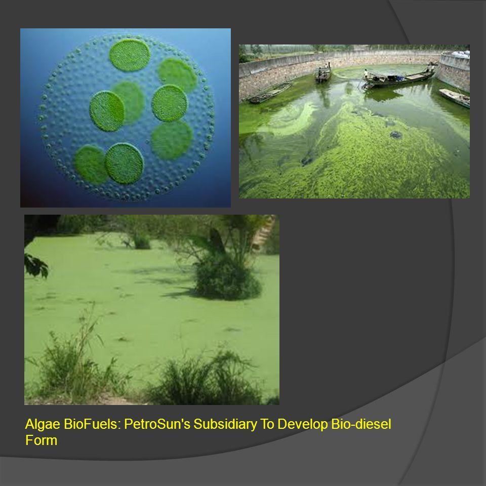 Algae BioFuels: PetroSun's Subsidiary To Develop Bio-diesel Form