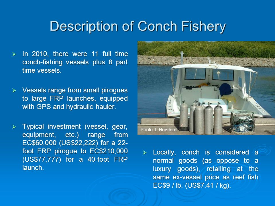 Description of Conch Fishery In 2010, there were 11 full time conch-fishing vessels plus 8 part time vessels. In 2010, there were 11 full time conch-f