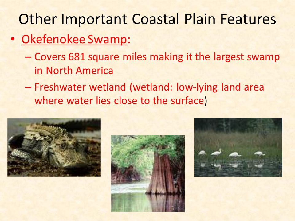 Other Important Coastal Plain Features Okefenokee Swamp: – Covers 681 square miles making it the largest swamp in North America – Freshwater wetland (