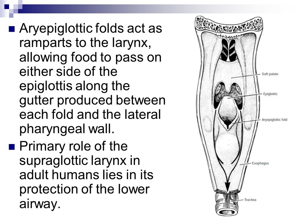 Aryepiglottic folds act as ramparts to the larynx, allowing food to pass on either side of the epiglottis along the gutter produced between each fold