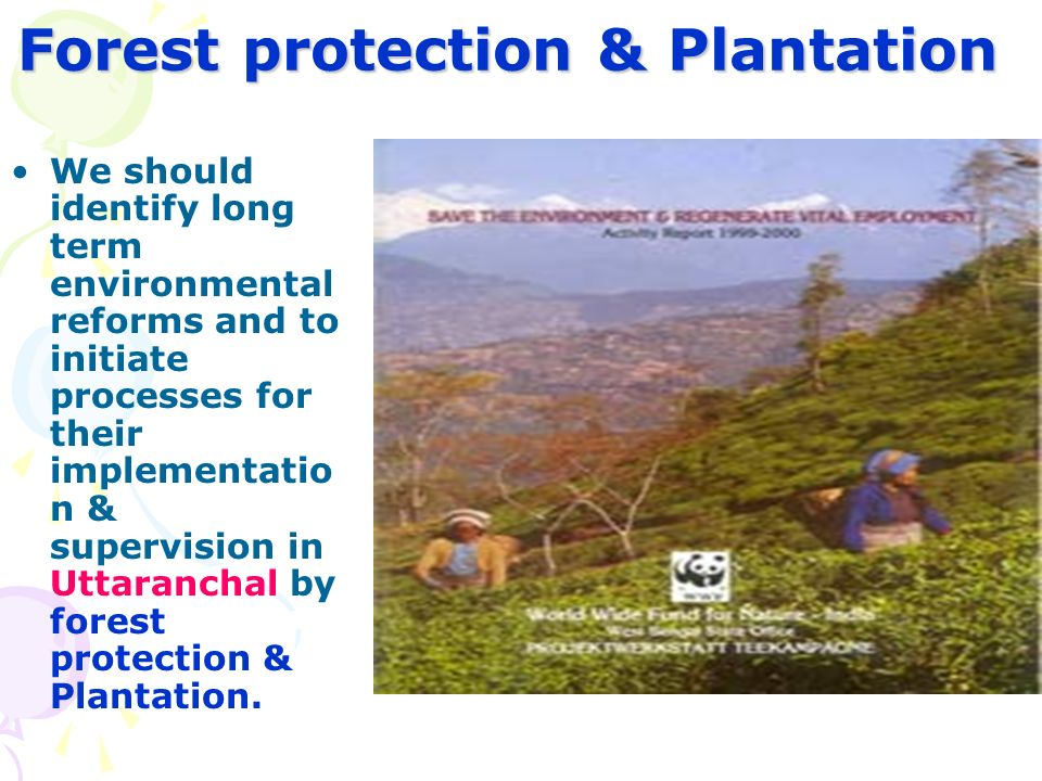 Forest protection & Plantation We should identify long term environmental reforms and to initiate processes for their implementatio n & supervision in Uttaranchal by forest protection & Plantation.