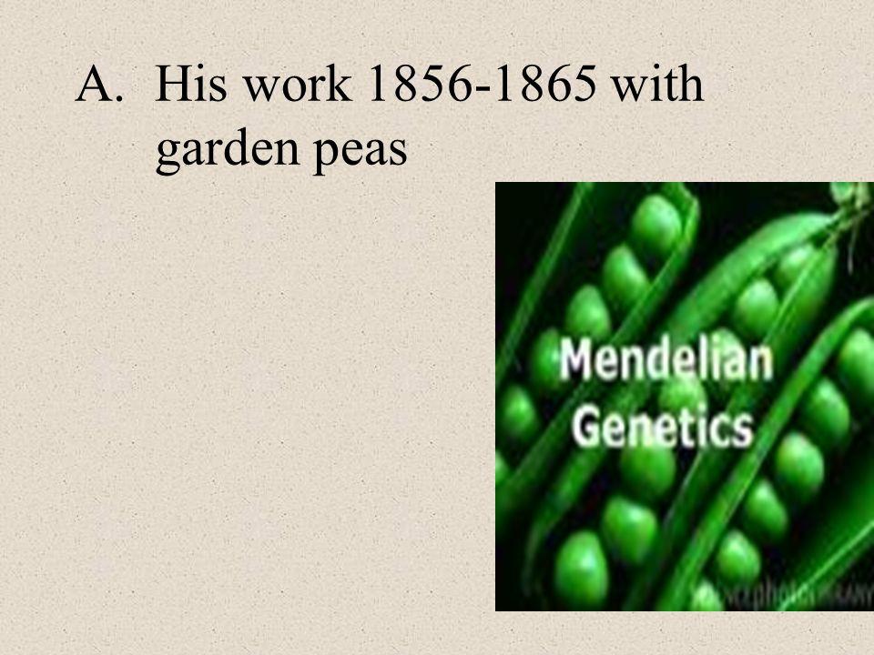 A.His work 1856-1865 with garden peas