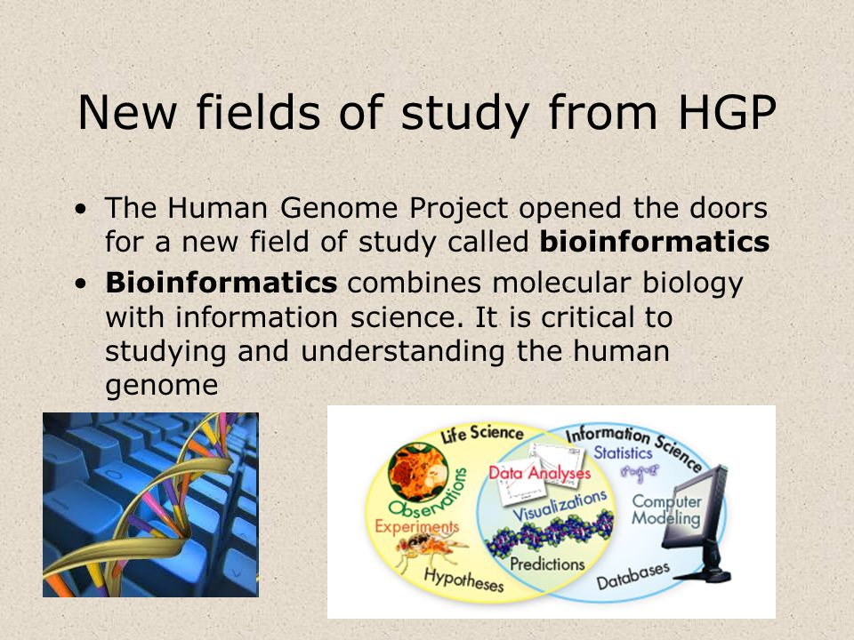 New fields of study from HGP The Human Genome Project opened the doors for a new field of study called bioinformatics Bioinformatics combines molecula