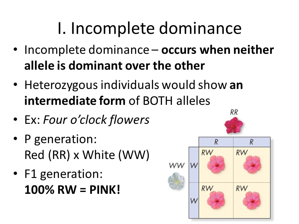 Practice incomplete dominance: Show the cross of a red flower with a pink flower : Genotypes: Phenotypes:
