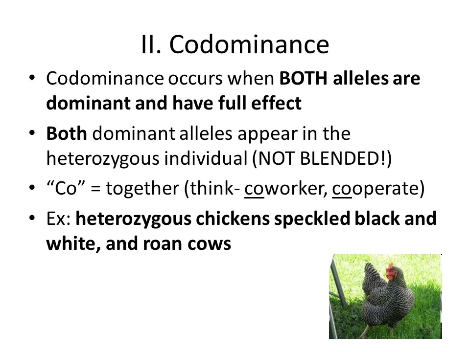 II. Codominance Codominance occurs when BOTH alleles are dominant and have full effect Both dominant alleles appear in the heterozygous individual (NO