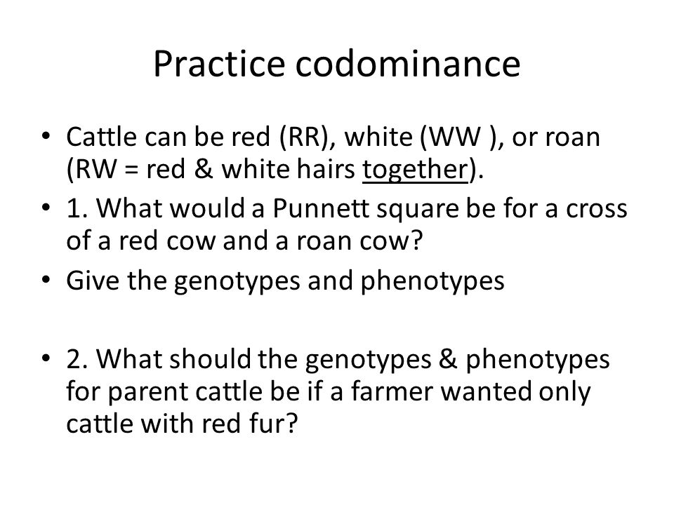 Practice codominance Cattle can be red (RR), white (WW ), or roan (RW = red & white hairs together). 1. What would a Punnett square be for a cross of