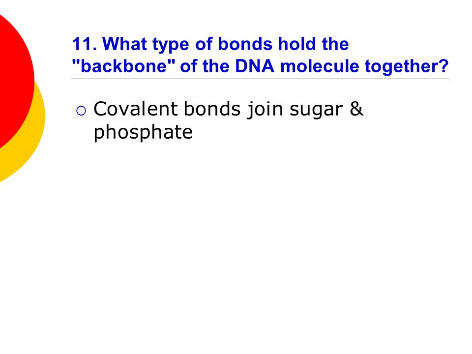 11. What type of bonds hold the