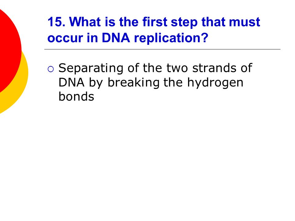 15. What is the first step that must occur in DNA replication? Separating of the two strands of DNA by breaking the hydrogen bonds