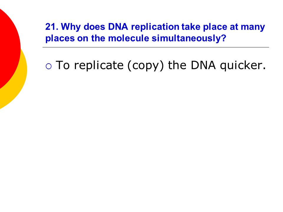21. Why does DNA replication take place at many places on the molecule simultaneously? To replicate (copy) the DNA quicker.