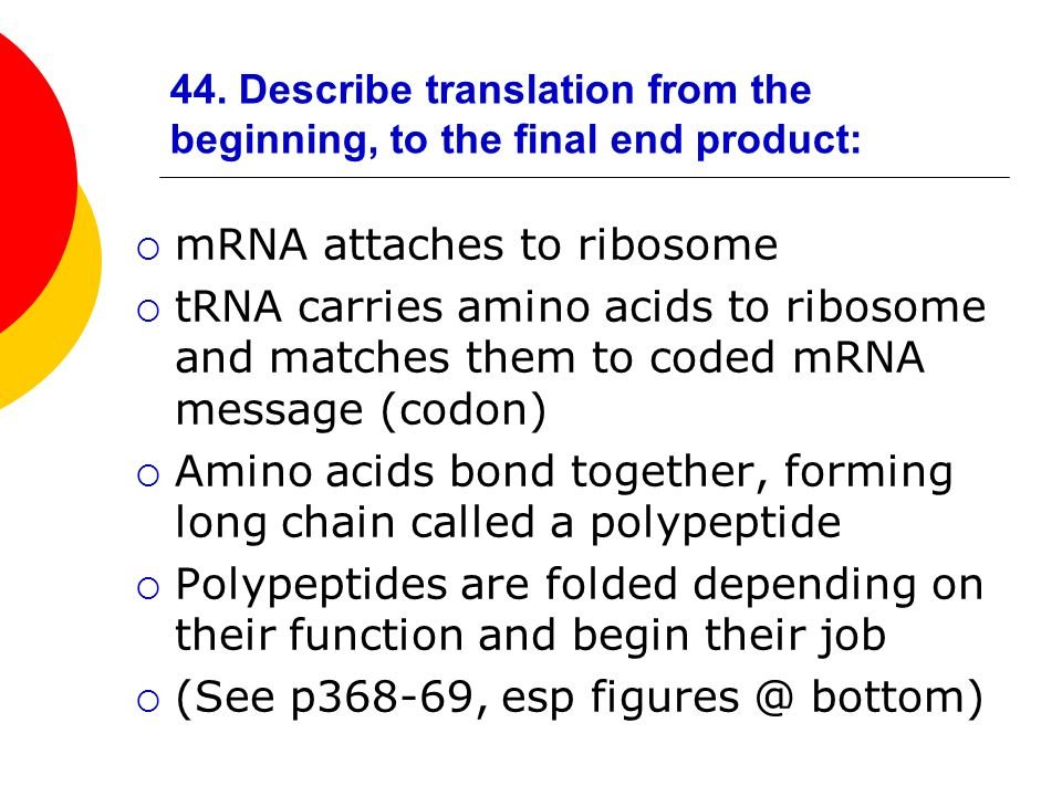 44. Describe translation from the beginning, to the final end product: mRNA attaches to ribosome tRNA carries amino acids to ribosome and matches them