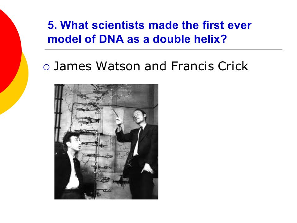 5. What scientists made the first ever model of DNA as a double helix? James Watson and Francis Crick