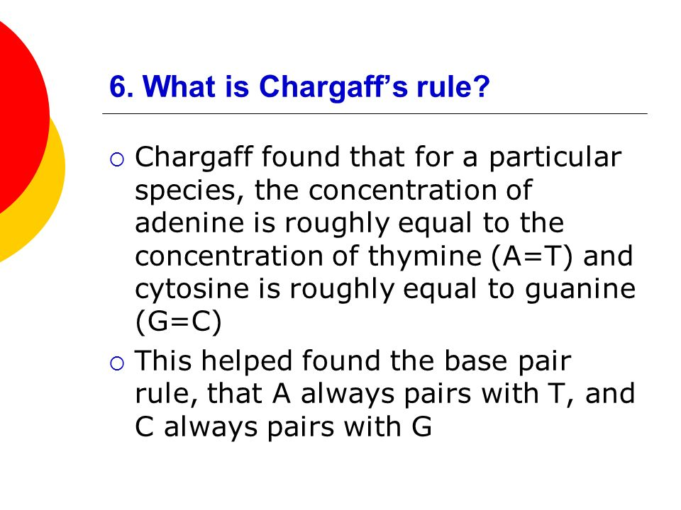 6. What is Chargaffs rule? Chargaff found that for a particular species, the concentration of adenine is roughly equal to the concentration of thymine
