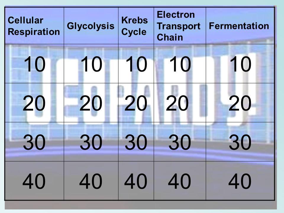 Cellular Respiration Glycolysis Krebs Cycle Electron Transport Chain Fermentation 10 20 30 40
