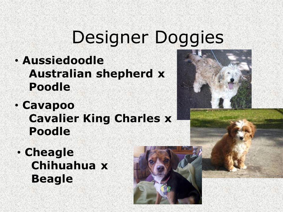 WEBSITE: http://www.dogbreedinfo.com/hybriddogs.htmhttp://www.dogbreedinfo.com/hybriddogs.htm List of Hybrid Dogs (Designer Dogs) (Boutique Dogs) The