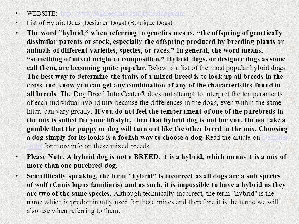 Designer Doggies Aussiedoodle Australian shepherd x Poodle Cavapoo Cavalier King Charles x Poodle Cheagle Chihuahua x Beagle