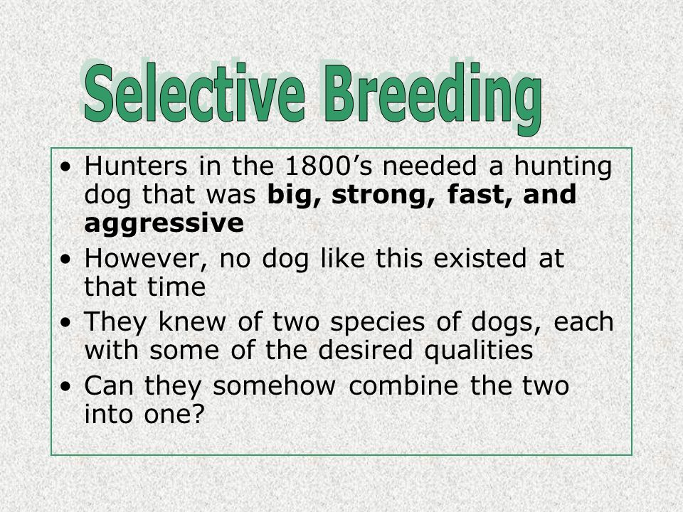 Hunters in the 1800s needed a hunting dog that was big, strong, fast, and aggressive However, no dog like this existed at that time They knew of two species of dogs, each with some of the desired qualities Can they somehow combine the two into one?