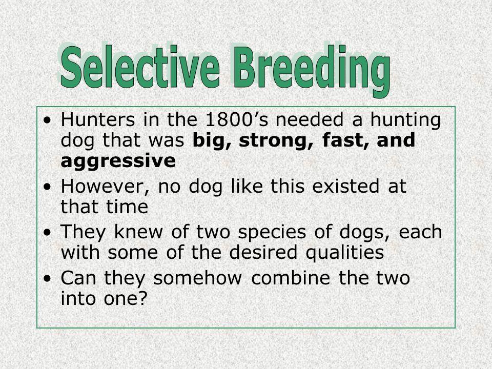 15.1 SELECTIVE BREEDING (Hybridization vs. Inbreeding; biotechnology) 15.1 SELECTIVE BREEDING (Hybridization vs. Inbreeding; biotechnology)