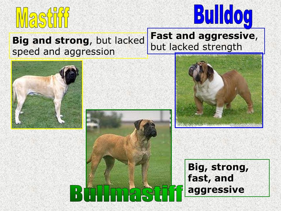Big and strong, but lacked speed and aggression Fast and aggressive, but lacked strength Big, strong, fast, and aggressive