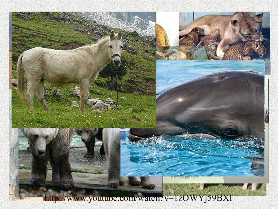 Hybridization Hybridized animals are called hybrids Can you identify these hybrids.