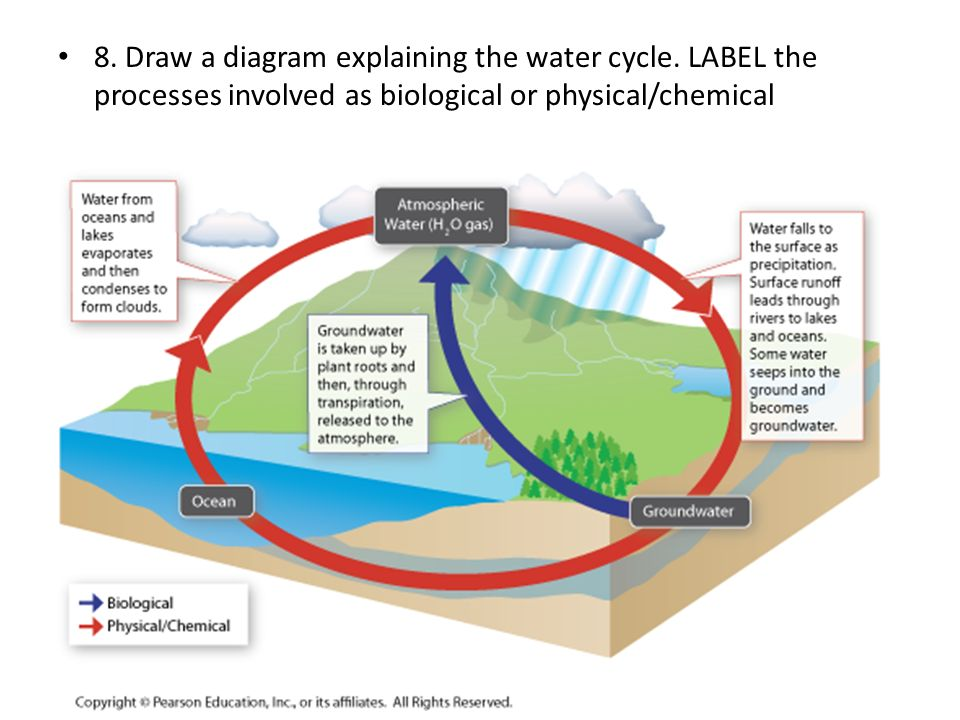8. Draw a diagram explaining the water cycle. LABEL the processes involved as biological or physical/chemical
