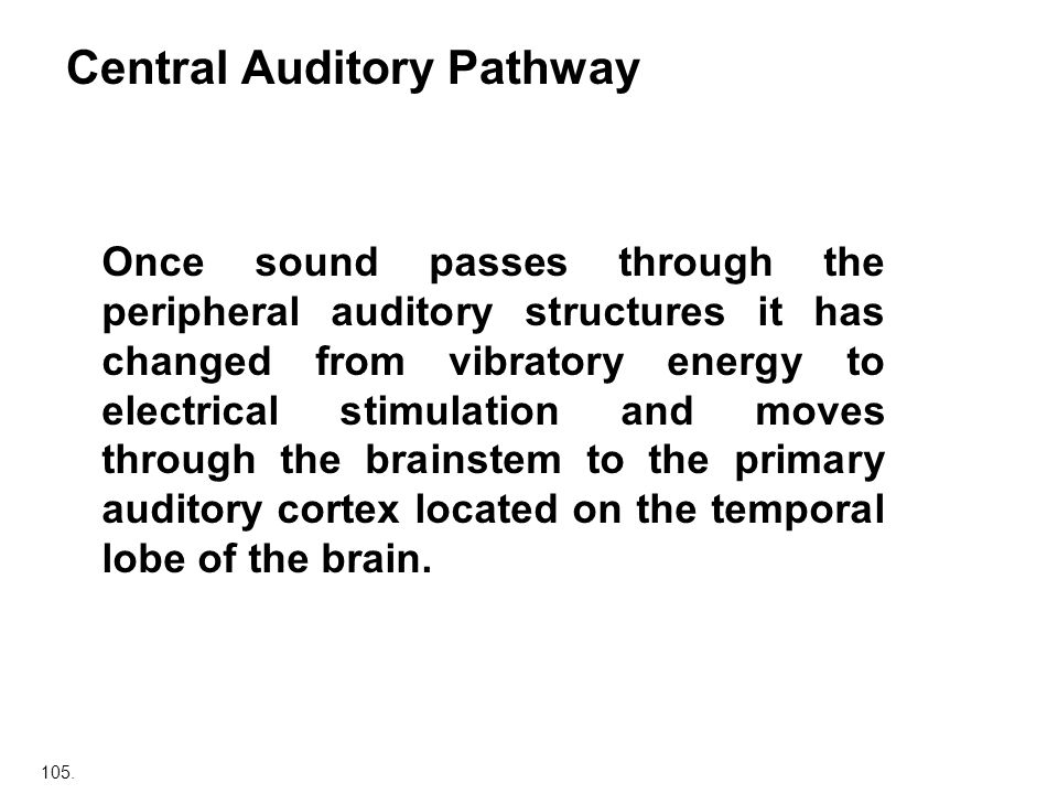 105. Central Auditory Pathway Once sound passes through the peripheral auditory structures it has changed from vibratory energy to electrical stimulat