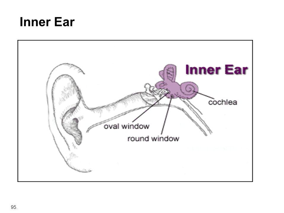 95. Inner Ear