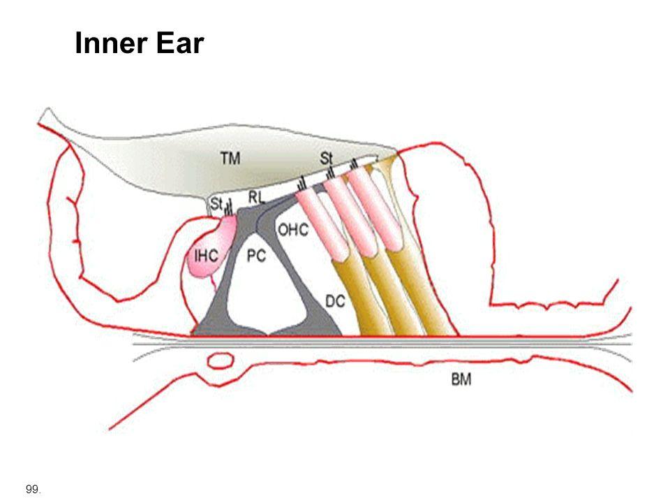 99. Inner Ear