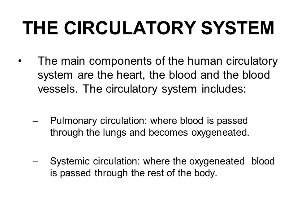 THE CIRCULATORY SYSTEM The main components of the human circulatory system are the heart, the blood and the blood vessels. The circulatory system incl