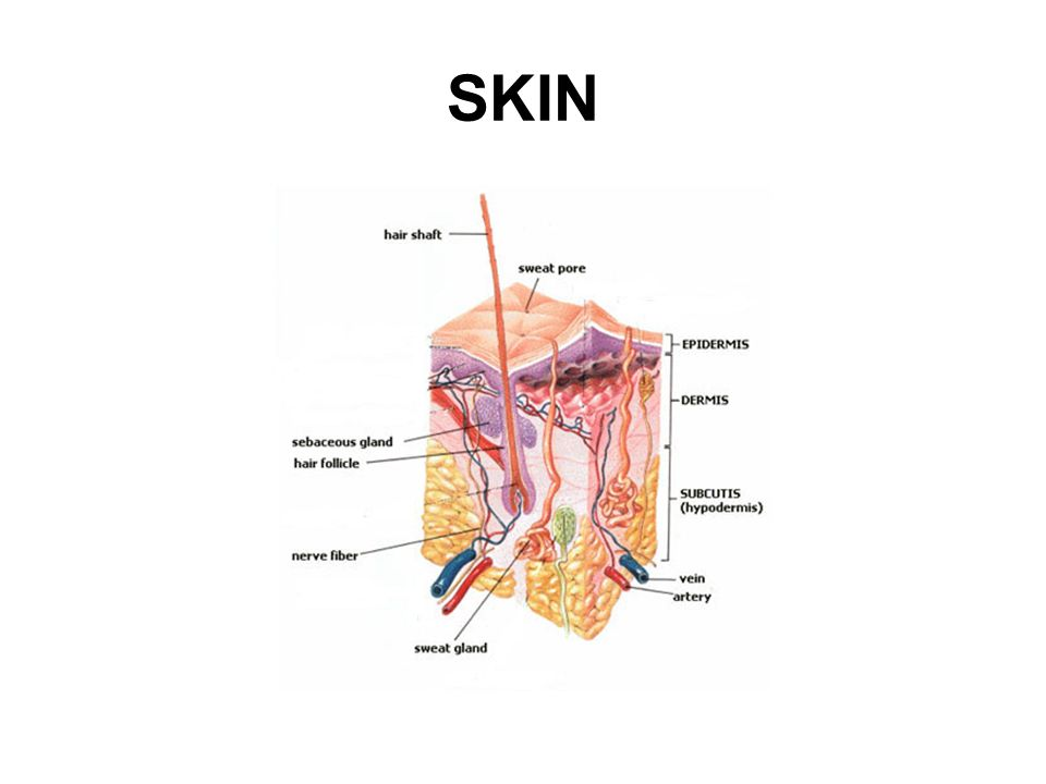 THE CIRCULATORY SYSTEM The lymphatic system is responsible for the removal of interstitial fluid from tissues as well as the absorption and transport of fats and fatty acids.