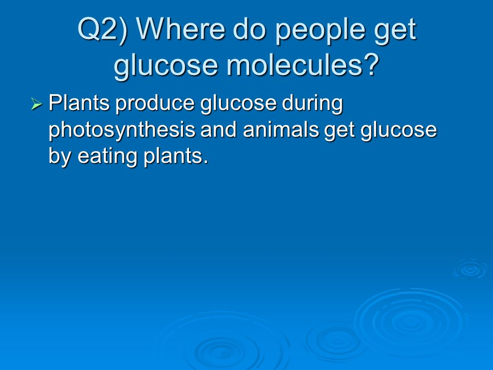 Q2) Where do people get glucose molecules? Plants produce glucose during photosynthesis and animals get glucose by eating plants. Plants produce gluco