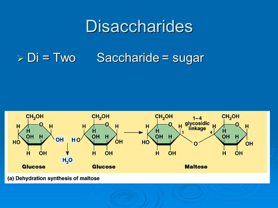 Disaccharides Di = Two Saccharide = sugar Di = Two Saccharide = sugar