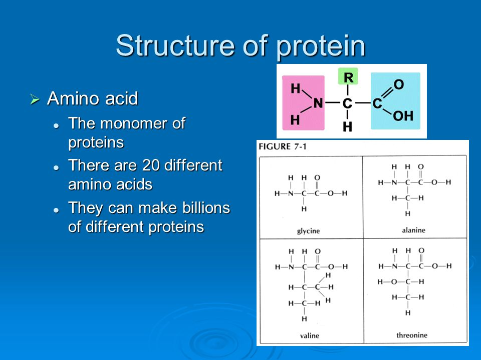 Structure of protein Amino acid Amino acid The monomer of proteins The monomer of proteins There are 20 different amino acids There are 20 different a