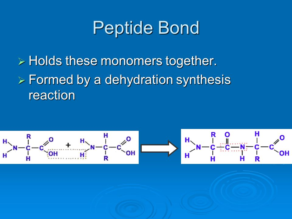 Peptide Bond Holds these monomers together. Holds these monomers together. Formed by a dehydration synthesis reaction Formed by a dehydration synthesi