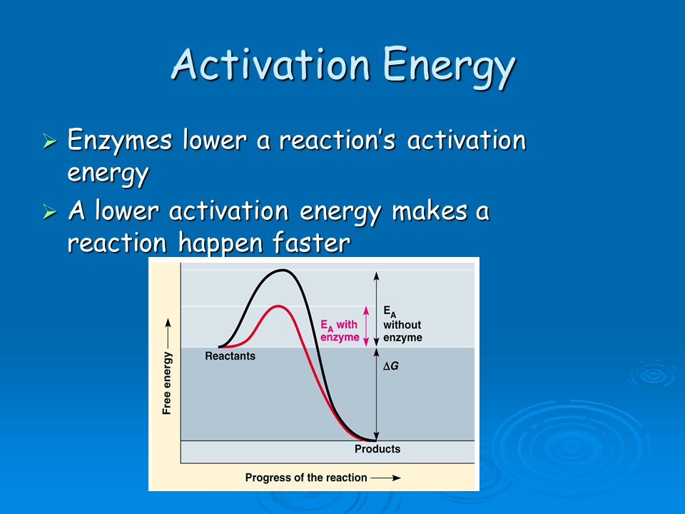 Activation Energy Enzymes lower a reactions activation energy Enzymes lower a reactions activation energy A lower activation energy makes a reaction h