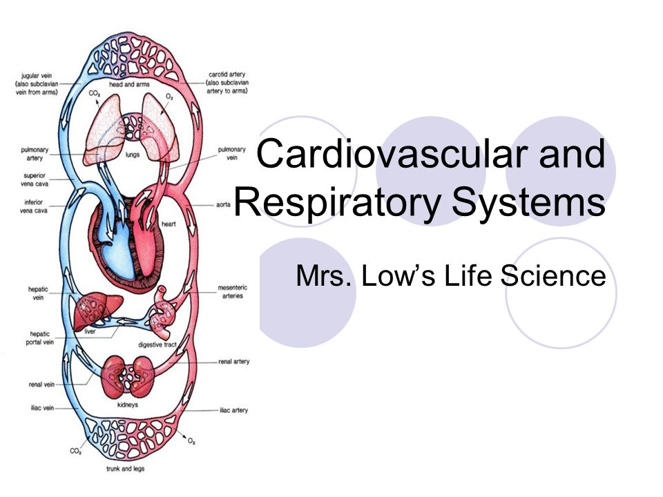 Cardiovascular and Respiratory Systems Mrs. Lows Life Science