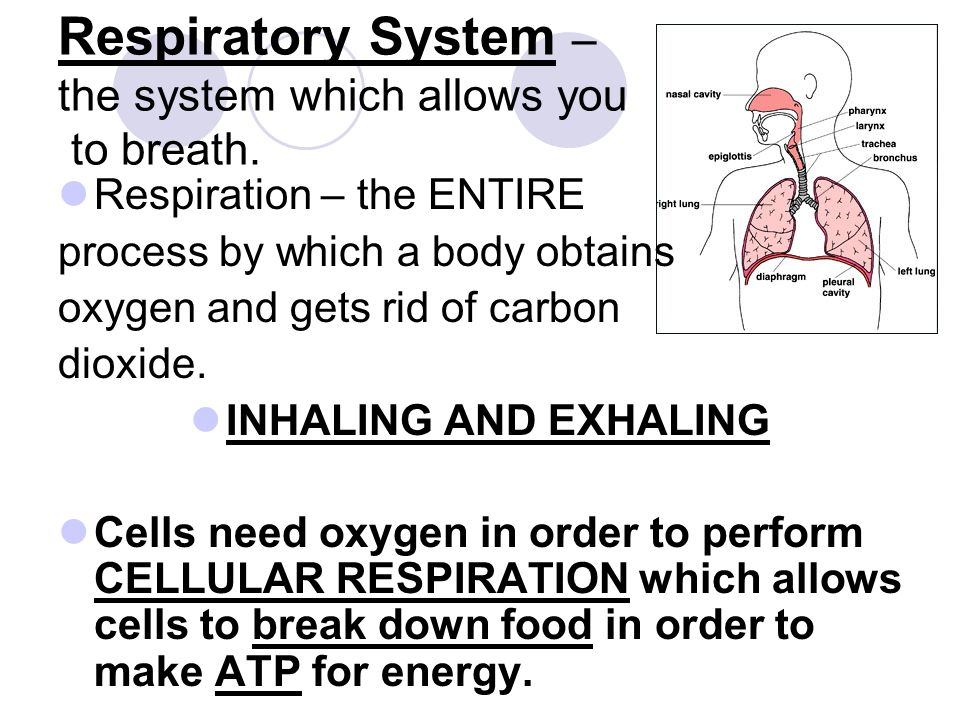 Respiratory System – the system which allows you to breath. Respiration – the ENTIRE process by which a body obtains oxygen and gets rid of carbon dio