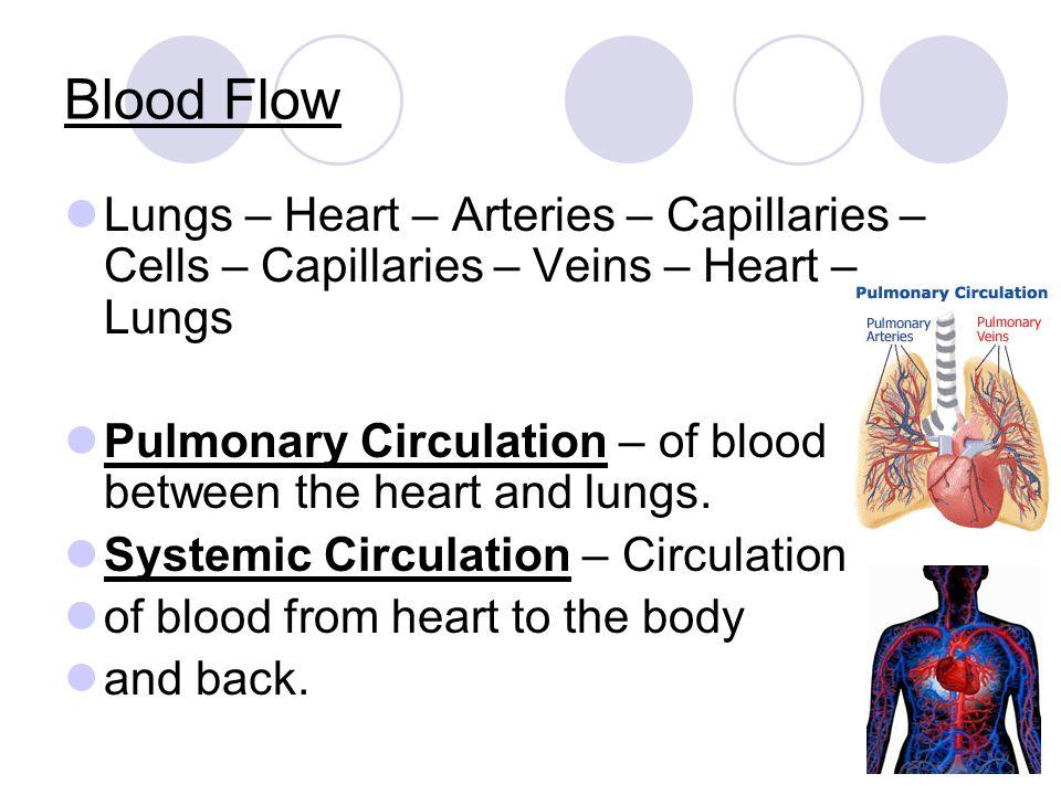 Blood Flow Lungs – Heart – Arteries – Capillaries – Cells – Capillaries – Veins – Heart – Lungs Pulmonary Circulation – of blood between the heart and