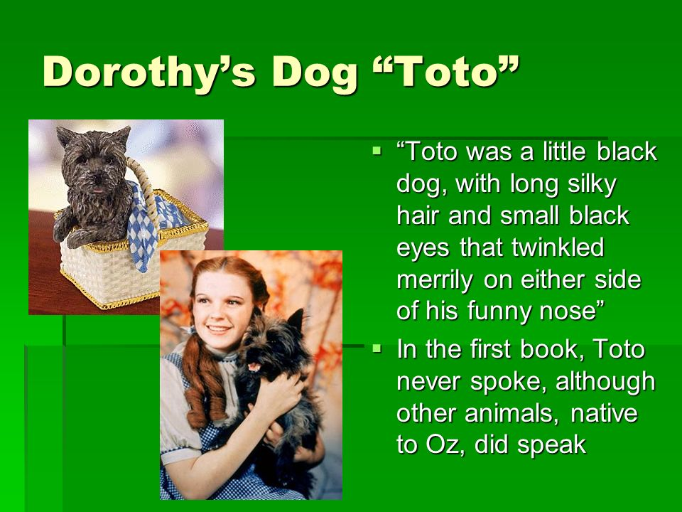 Dorothys Dog Toto Toto was a little black dog, with long silky hair and small black eyes that twinkled merrily on either side of his funny nose Toto was a little black dog, with long silky hair and small black eyes that twinkled merrily on either side of his funny nose In the first book, Toto never spoke, although other animals, native to Oz, did speak In the first book, Toto never spoke, although other animals, native to Oz, did speak